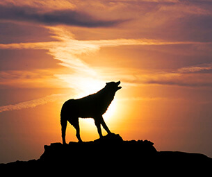 Wolf statue at sunset